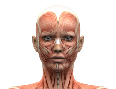 Músculos femeninas Cabeza anatomía - Vista frontal Foto de archivo - 28998218