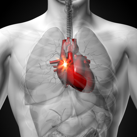 body heart: Heart - Male anatomy of human organs - x-ray view Stock Photo