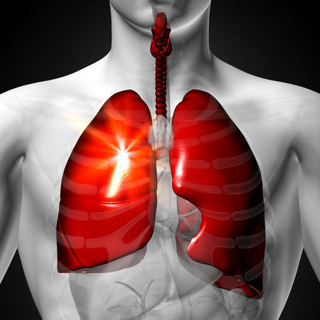 frontal view: Lungs - Male anatomy of human organs - x-ray view