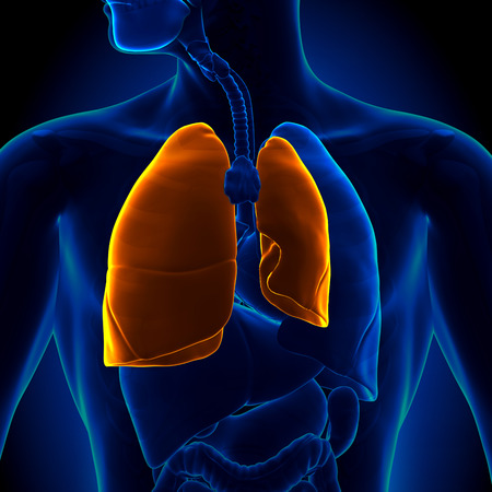 respiration: Pneumothorax - Collapsed Lung