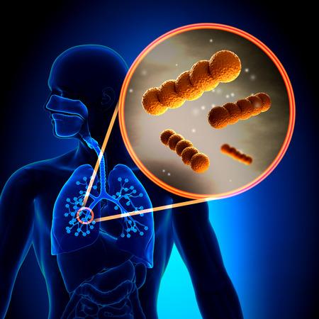 Streptococcus -  Spherical Gram-positive bacteria in detail