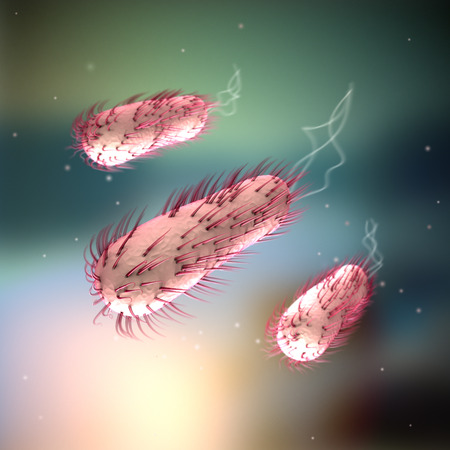 intestinal flora: E coli - Escherichia coli Stock Photo