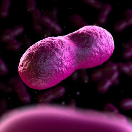 bacteria antibiotic: Yersinia Pestis - Black Death Stock Photo