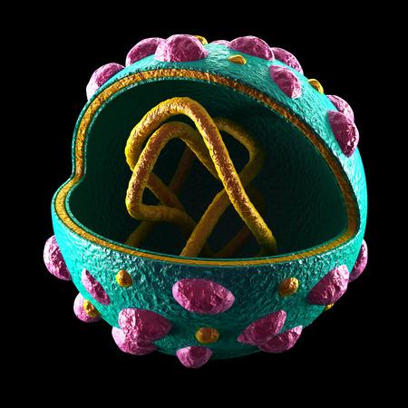 Hantavirus Cell - isolated on black photo