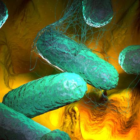 virus cell: Typhoid Fever Stock Photo