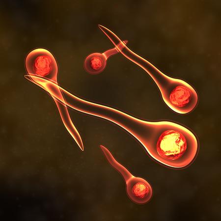 small artery: Tetanus Bacteria