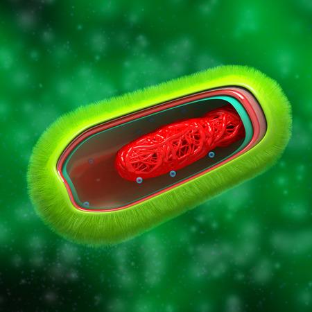 Bacteria - Prokaryote Cell Anatomy - in fluid