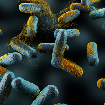 bacterias: Las bacterias Clostridium perfringens Foto de archivo