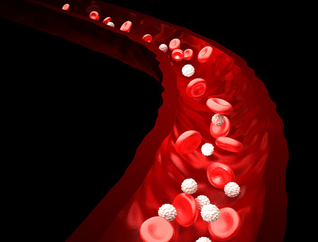 Blood Stream - Red and White Blood Cells Flowing Through Vein  - isolated on black