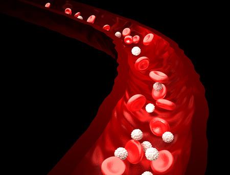 globulos blancos: Corriente de Sangre - rojo y blanco Gl�bulos que fluye a trav�s de la vena - aislado en negro Foto de archivo