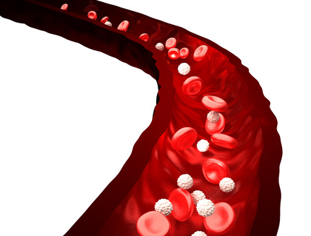 white blood cells: Blood Stream - Red and White Blood Cells Flowing Through Vein - isolated on white
