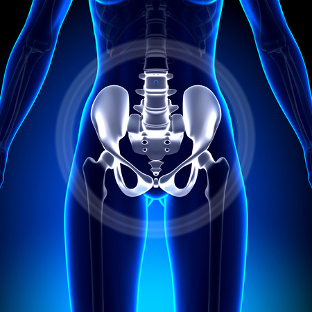 Female Hip  Sacrum  Pubis  Ischium  Ilium - Anato Stock Photo