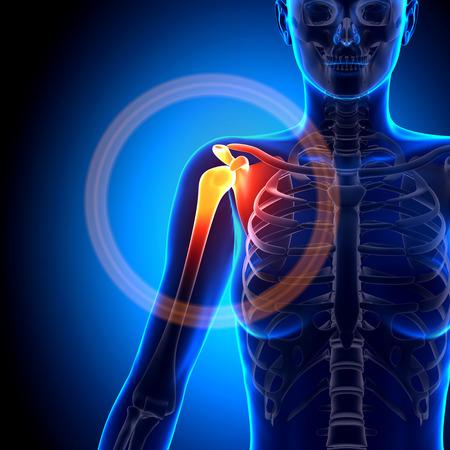 女性の肩・肩甲骨・鎖骨 - 解剖学骨