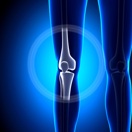 patella: Female Knee Joint - Anatomy Bones