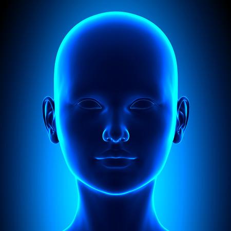 フロントの女性の頭の解剖学 写真素材