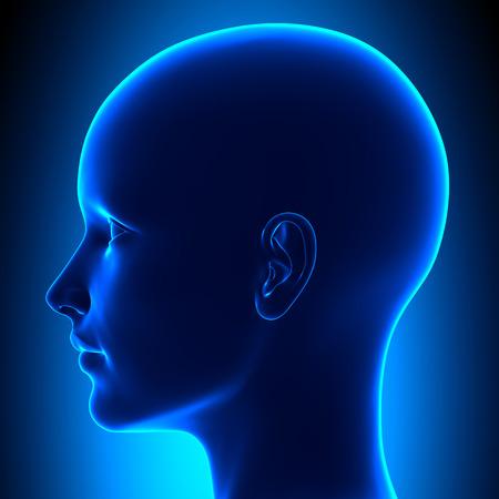 perfil de mujer rostro: Side cabeza femenina Anatomía Foto de archivo