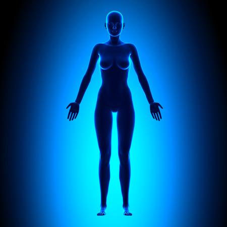 전체 여성의 몸 - 전면보기