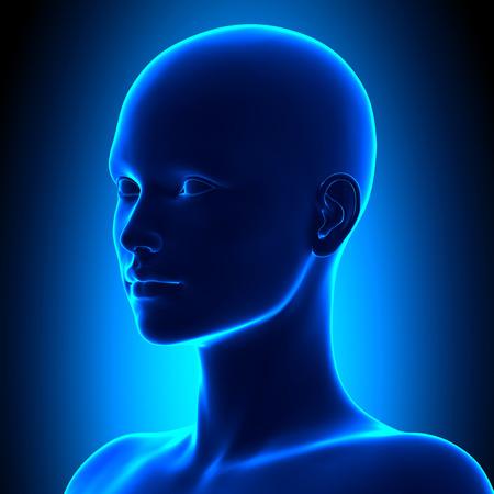 等尺性の女性の頭の解剖学