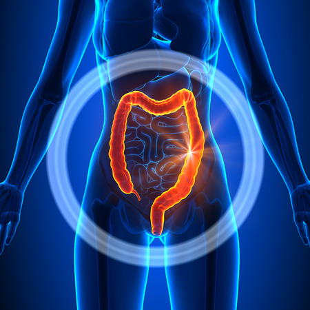 colon surgery: Colon - Female Organs