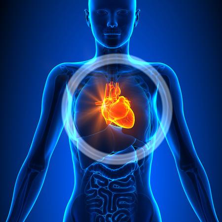 body heart: Heart of Female Organs