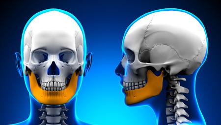 mandible: Female Mandible Bone Skull Anatomy - blue concept