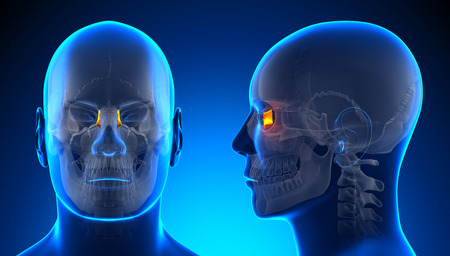 lacrimal: Male Lacrimal Skull Anatomy - blue concept Stock Photo