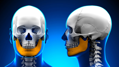 mandible: Male Mandible Bone Skull Anatomy - blue concept