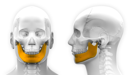 Male Mandible Bone Skull Anatomy - isolated on white Stockfoto