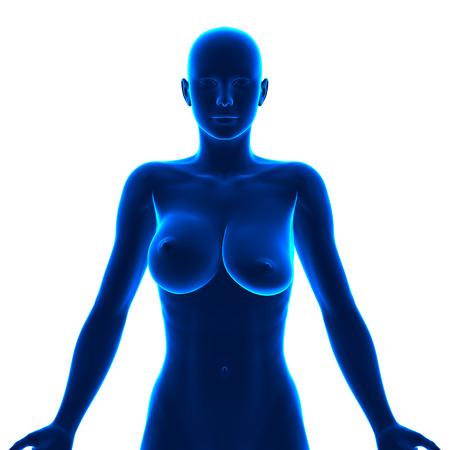 Brüste verschiedene Verschiedene Brüste