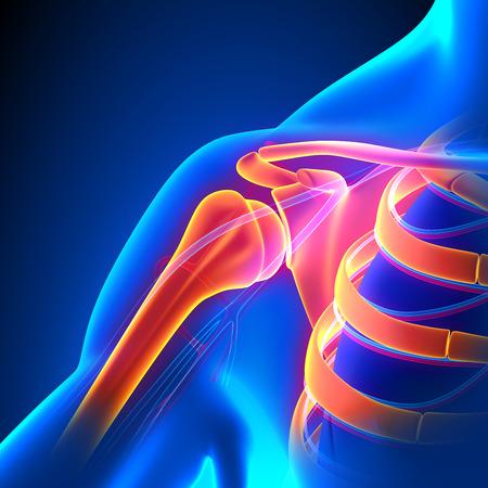 shoulders: Hombro concepto Conjunto Anatom�a del dolor con el Sistema Circulatorio Foto de archivo