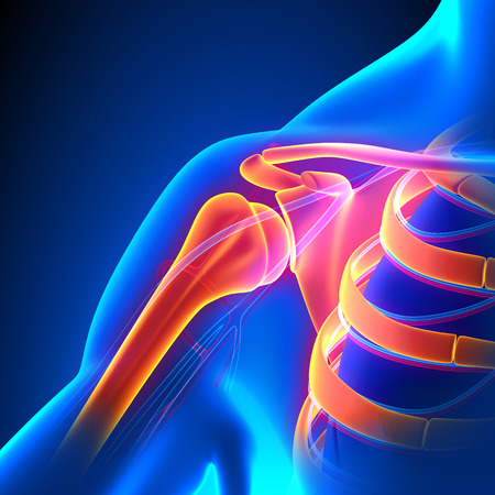 ache: Shoulder Joint Anatomy Pain concept with Circulatory System