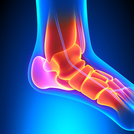painful: Ankle Bones Anatomy - Pain concept Stock Photo