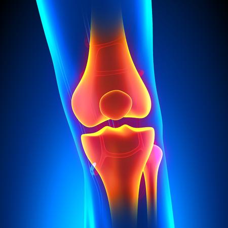 循環系と膝の解剖学の痛みコンセプト 写真素材