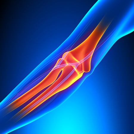bursitis: Elbow Joint Anatomy - Detailed with Circulatory System Stock Photo