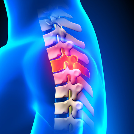 T3 Disc - Thoracic Spine Anatomy Stock Photo