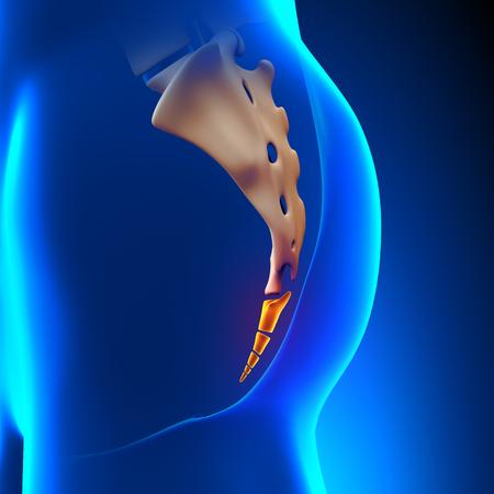 coccyx pain: Coccyx Bone Anatomy