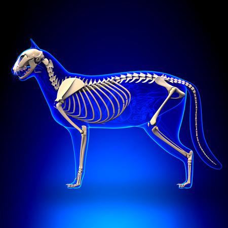x ray skeleton: Cat Skeleton Anatomy