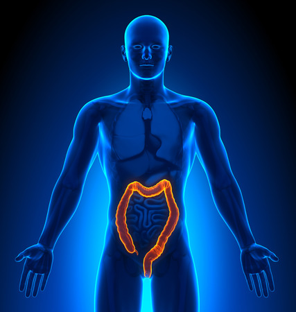 imaging: Medical Imaging - Male Organs - Colon Stock Photo