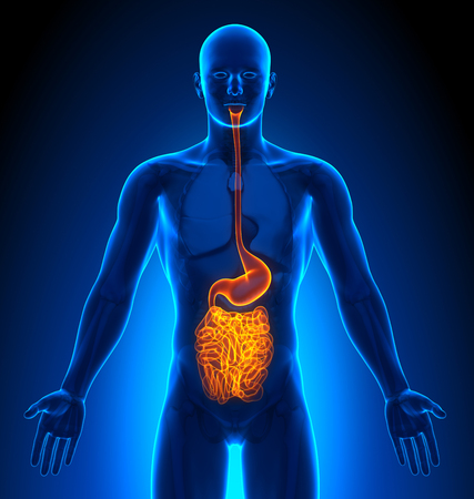 imaging: Medical Imaging - Male Organs - Guts Stock Photo