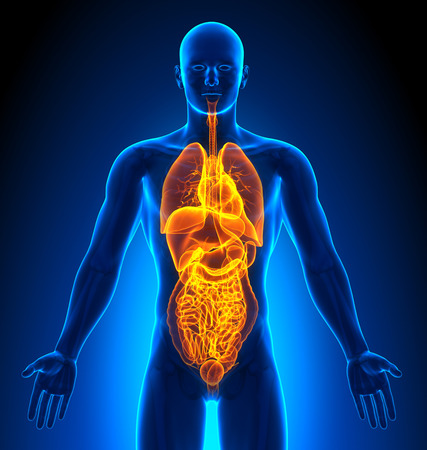 colon surgery: Medical Imaging - Male Organs Stock Photo