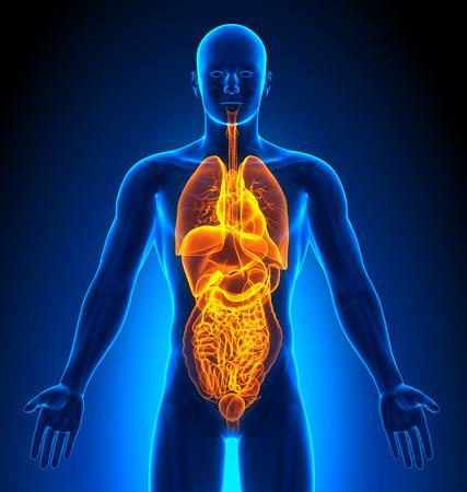 medical imaging: Medical Imaging - Male Organs Stock Photo