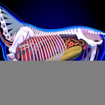 sistema digestivo: Caballo Anatomía - Anatomía interna del caballo Primer plano