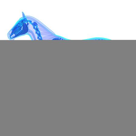Horse Stomach Horse Equus Anatomy Isolated On White Stock Photo
