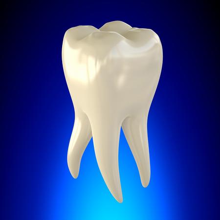 Tooth Molar Healthy