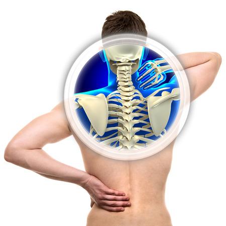 colonna vertebrale: Rachide cervicale isolato su bianco - concetto di real Anatomy