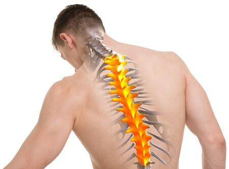 male anatomy: Thoracic Spine Anatomy isolated on white Stock Photo