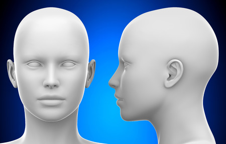 Blank White Female Head - Side and Front view 3D illustration