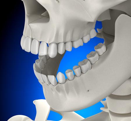 Teeth Skull Male Anatomy on blue background - 3D illustration