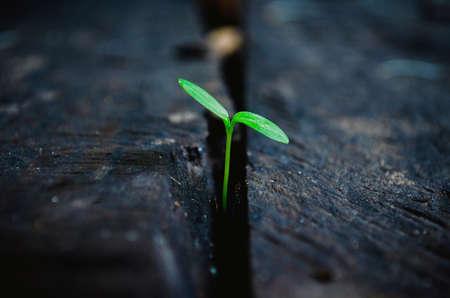 若い植物の成長する木の上