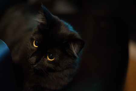 Attentive black cat looking away with blurry background